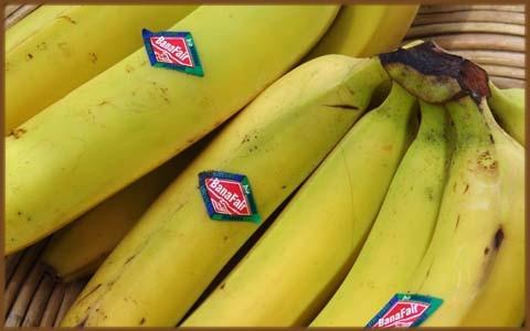 Foto Bananen_rahmen